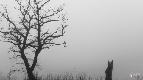 Disappeared in the fog