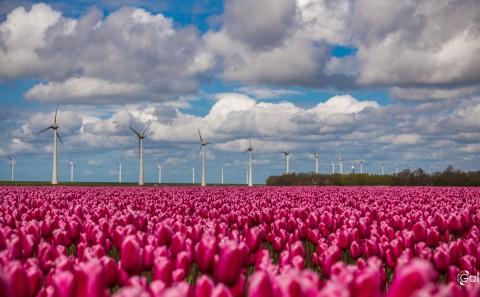 Olanda web-23