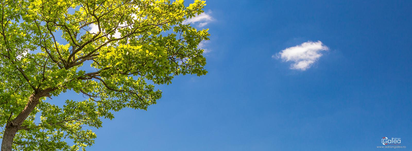 Eifel Park Tree