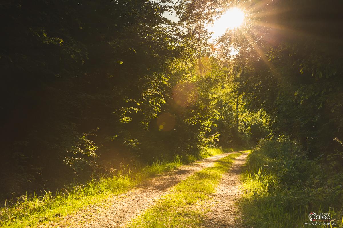 Eifel National Park - Sunny road